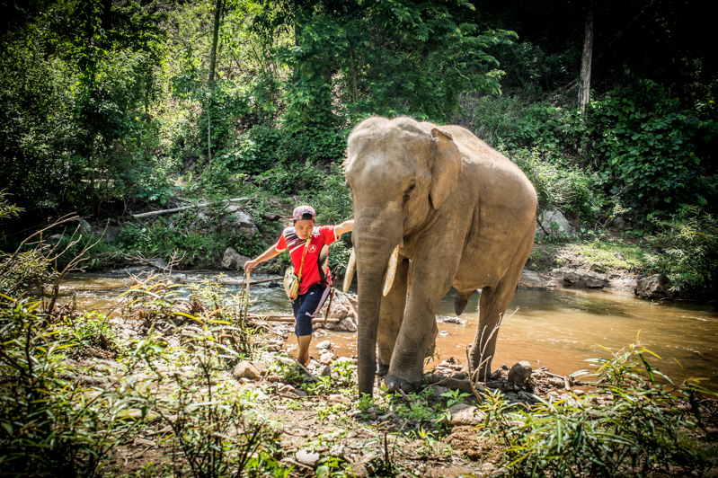 A Day with the Kindred Spirit Elephant Sanctuary