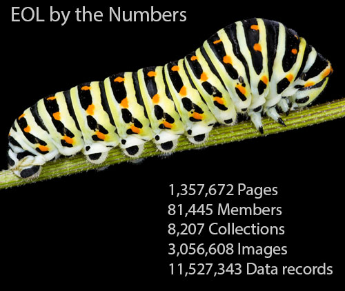 <br /> 1,357,672 Pages | 81,445 Members | 8,207 Collections | 3,056,608 Images | 11,527,343 Data records