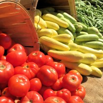 Massachusetts Farmers Markets - Red Yellow Green Veggies