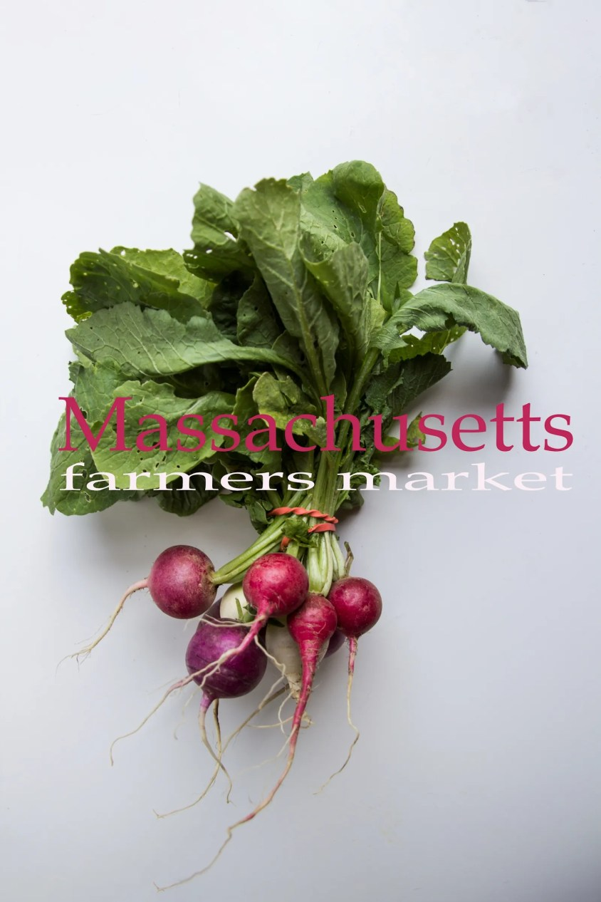 Massachusetts Events Farmers Markets Organic Radishes for Massachusetts Farmers Markets Photo Gallery