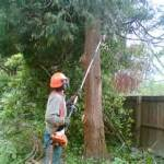 Pole Saw (Gas) Rental available for your next landscaping project