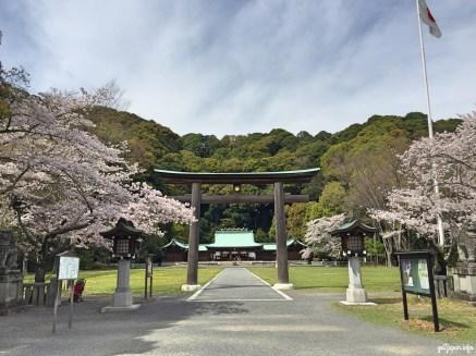 sakura,Shrine,Jinjya,Gokoku,Shizuoka,Japan,Sakura,sightseeing,triptojapan,japantrip,go2japan,forest,peaceful,