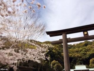 Shrine,Jinjya,Gokoku,Shizuoka,Japan,Sakura,sightseeing,triptojapan,japantrip,go2japan,