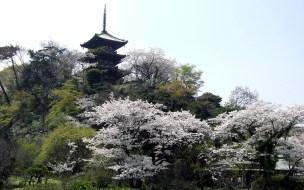 横浜 三渓園(Yokohama Sankeien Garden)