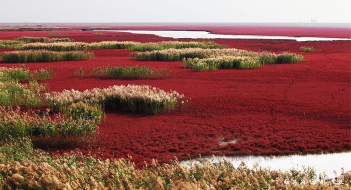 Red Sea 1