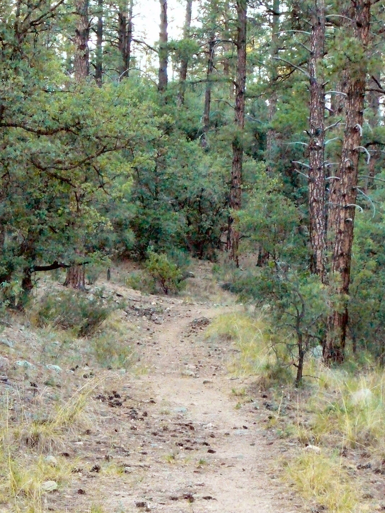 One section of singletrack in The Pines