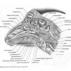 Hornet Anatomy Diagram 91 Toyota Pickup Ignition Wiring Goat Brain