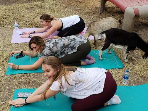 Goat Yoga Feb 2019 (111)