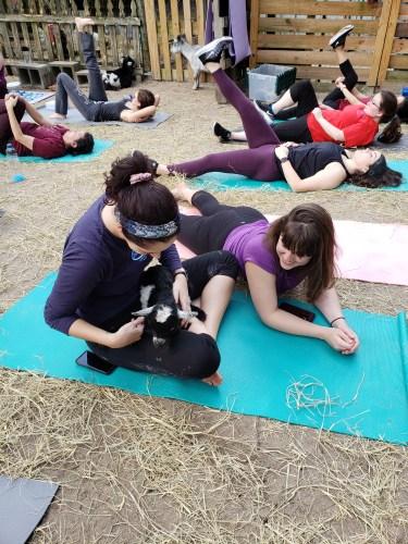 Goat Yoga Feb 2019 (2)