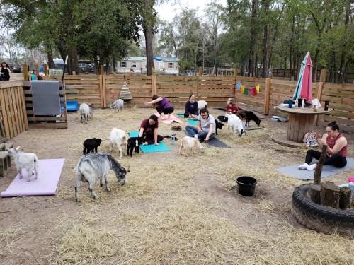 Goat Yoga Feb 2019 (55)