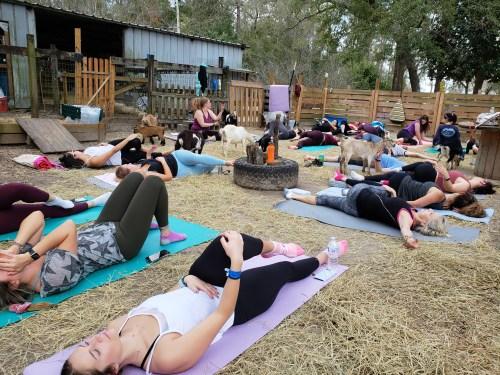 Goat Yoga Feb 2019 (6)