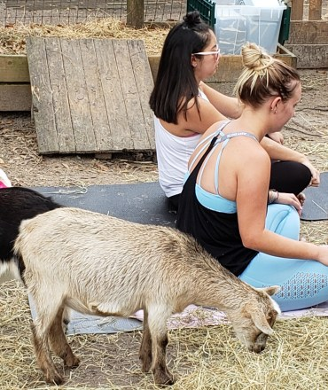Goat Yoga Feb 2019 (79)