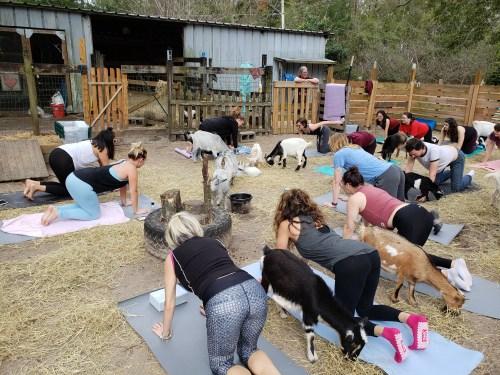 Goat Yoga Feb 2019 (98)