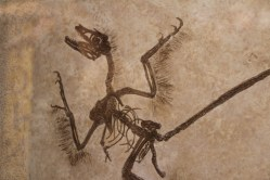 Archeopteryx fossil copy. Still my favorite to see.