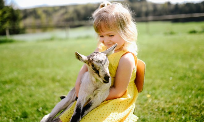 homemade goat milk infant formula recipe logo