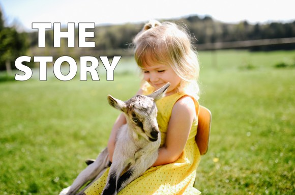 the story of the homemade goat milk formula recipe