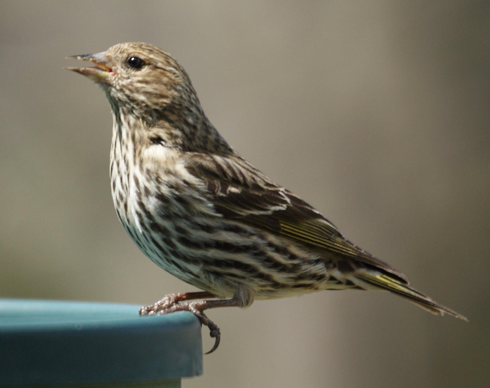 Common Birds Of Northern New Jersey  Consiro