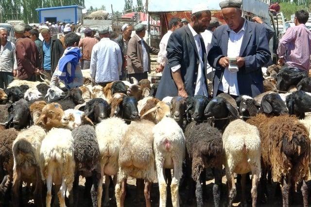 animal market bartering