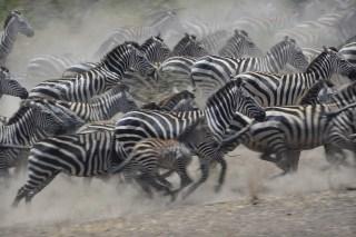 Top 5 Safari Budget Accommodations