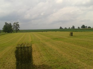 Hay bales waiting to be picked up.