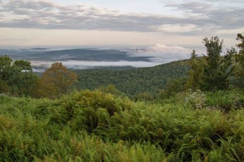 Grafton Forest