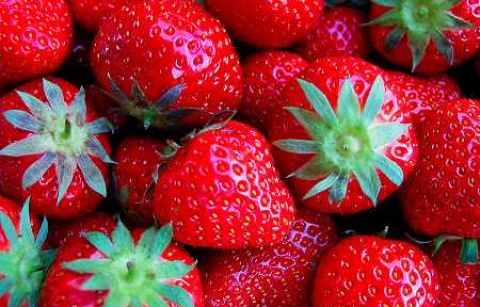 erdbeere3