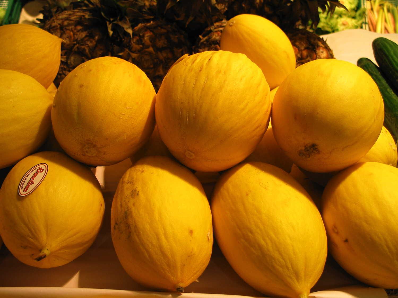 zuckermelone3682