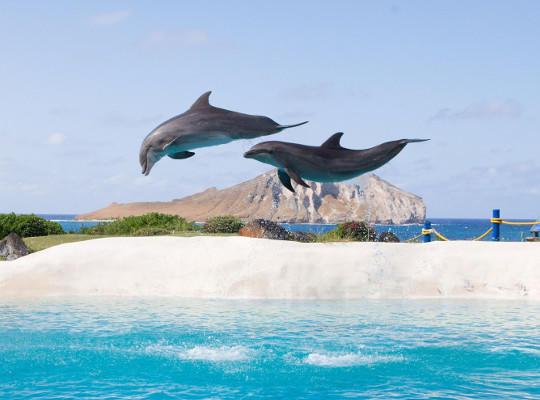 dolphin encounter sea life
