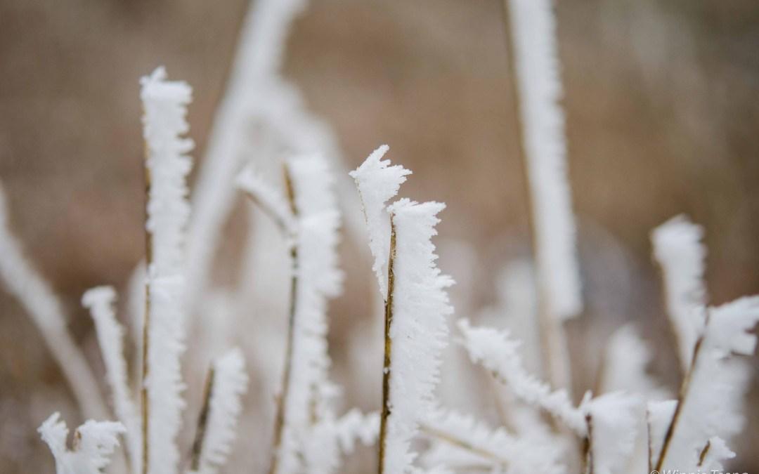 Farewell Winter Wonderland