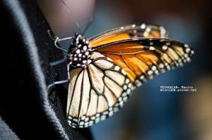 Beautiful Wing Structure