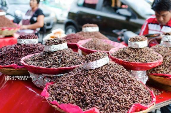 Fried Grasshoppers of all Shapes and Sizes