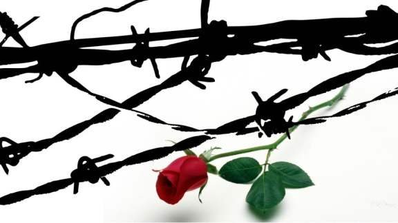 rose-barbed-wire-35540