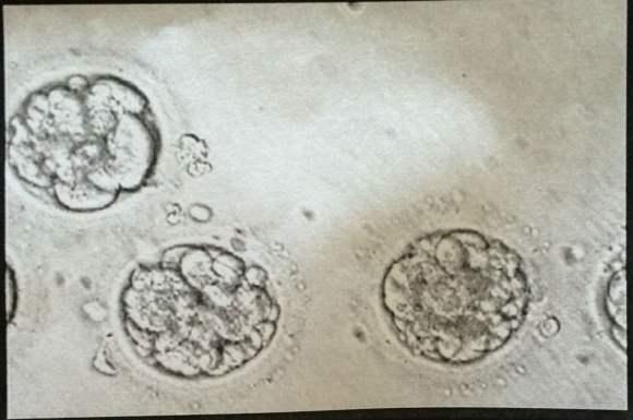 GCCjr, Embryo Version