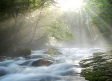 Rays of Sun on Forest Stream