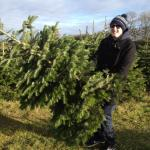 godberstravel, surviving Christmas with young children, Real Christmas Tree, Stoke Goldington Christmas Trees, Pick your own, PYO,