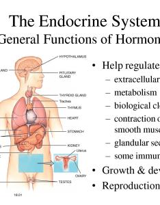 also copper estrogen and zinc hormone imbalance part goddess ignited rh goddessignited