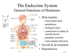 endocrine system - hormone imbalance
