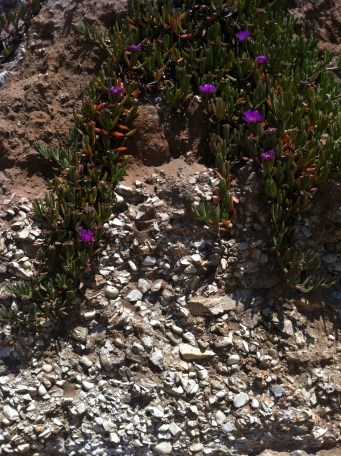 There are few things better than flowers growing miraculously out of rocks.