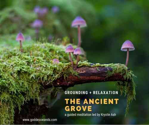 the ancient grove, guided meditation, grounding meditation, ground your energy, grounding for empaths, Krystle Ash, Goddess Wands, reiki meditation, reiki master meditation, reiki infused,