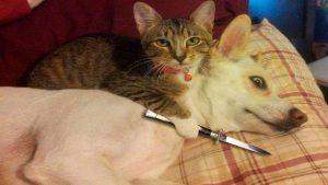 sjove billeder hund kat