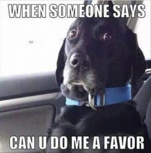 sjove billeder hund tjeneste