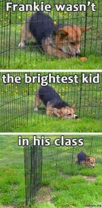 sjove billeder hund1