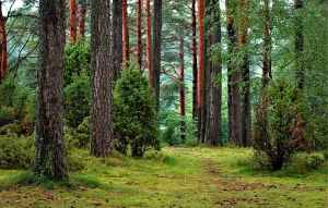 talemåder 3 skoven