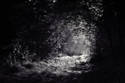 path through woods dark