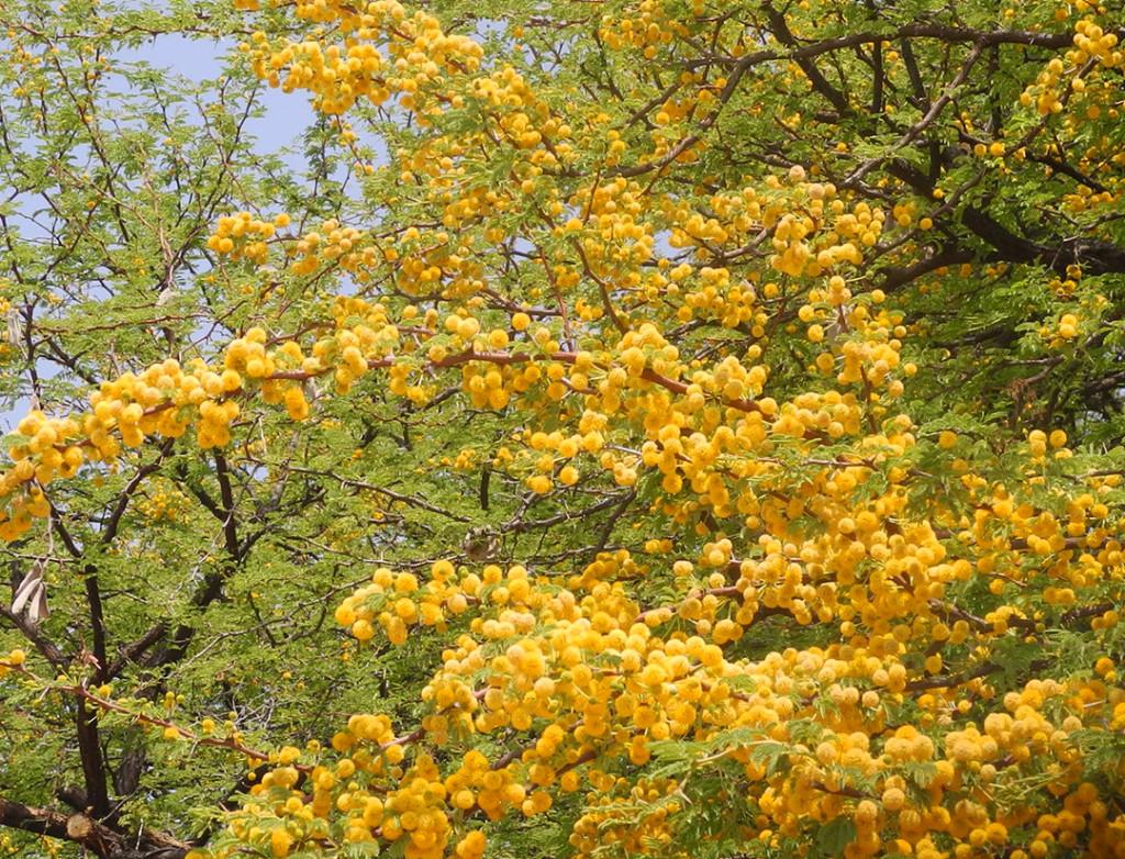 blossomsSlider