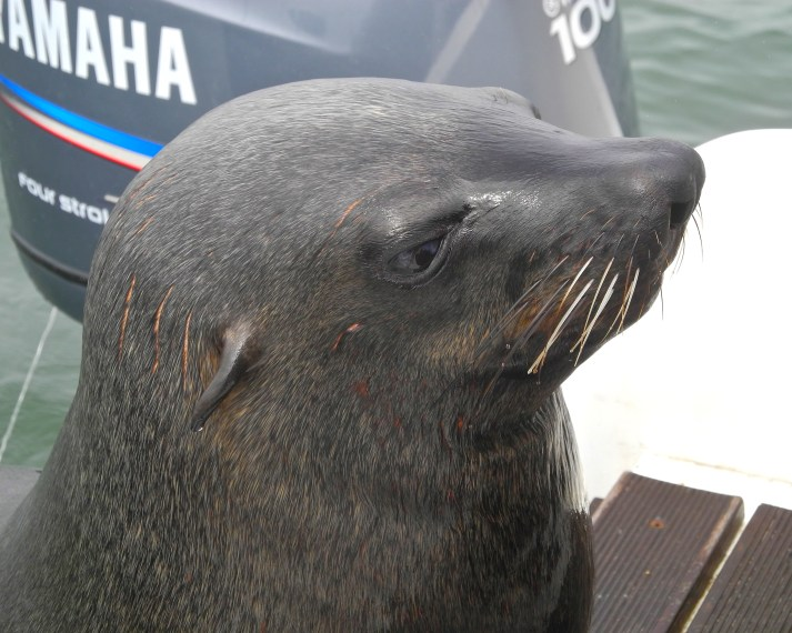 This bold boy hopped right onto the boat beside me. He was obviously used to being the center of attention!