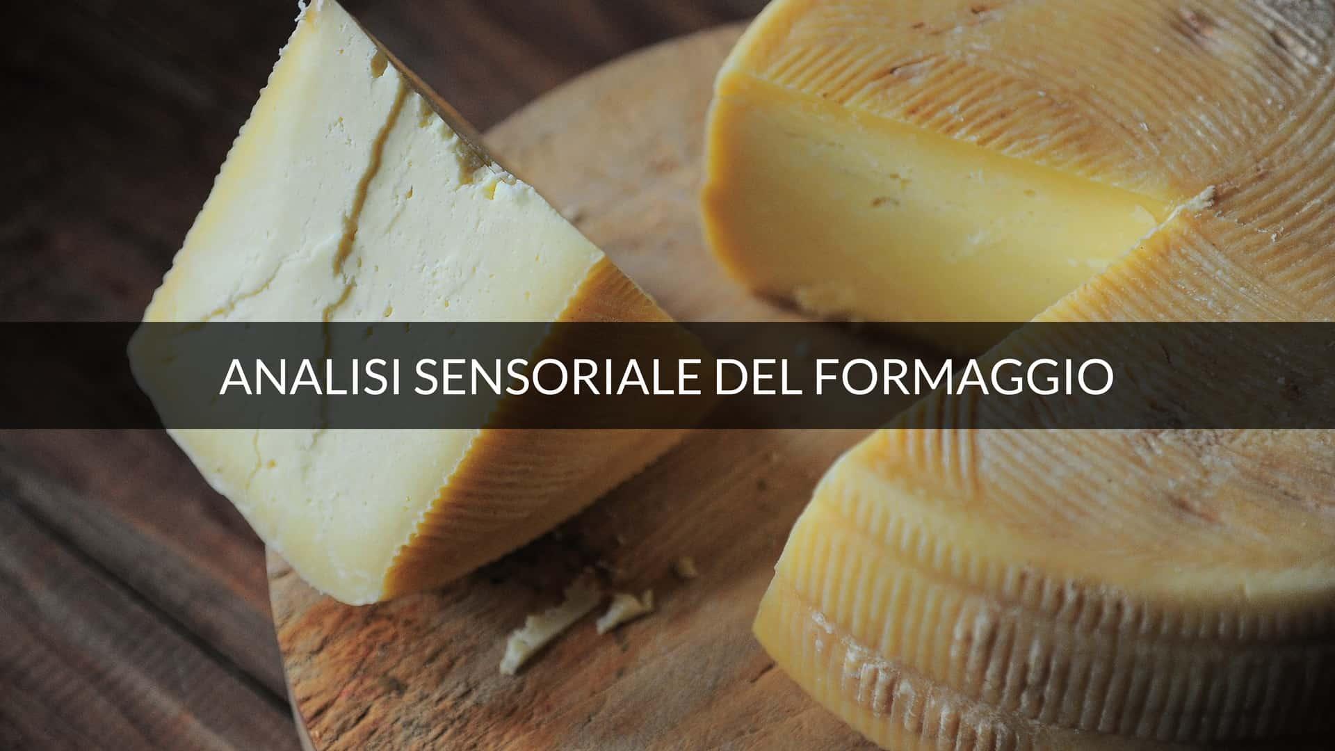 Analisi sensoriale del formaggio e il quinto sapore