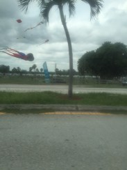 Kite Flying...nearly had me running off the road