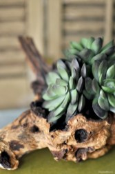Ideas to arrange your succulent with driftwood 03