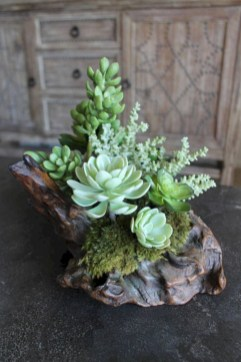 Ideas to arrange your succulent with driftwood 06